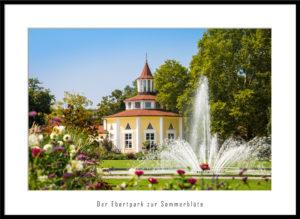 Der Ebertpark zur Sommerblüte